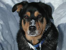 picture of dog in snow